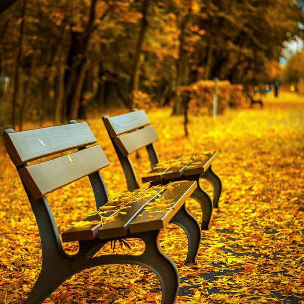 Une histoire d'automne à écrire